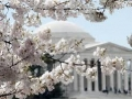 Memorial with Cherry Blossoms-2